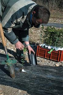 Tasser fortement la terre en veillant à recouvrir le dessus de la motte de quelques cm