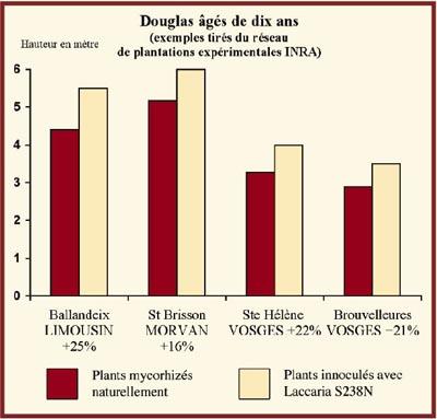 Alberi di Douglas di 10 anni (esempi dalla rete di piante sperimentali INRA (Invertire i 2 quadrati di colore e la legenda sotto il grafico)
