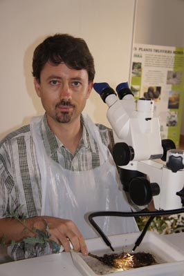Claude MURAT of INRA during a control of mycorhization of PLANTS TRUFFIERS ROBIN in the laboratory of ROBIN Pépinières