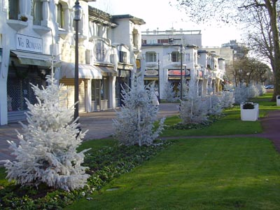 Mairie du TOUQUET - Sapins de Noël floqués blancs et sapins de Noël naturels fournis et livrés par ROBIN Pépinières.