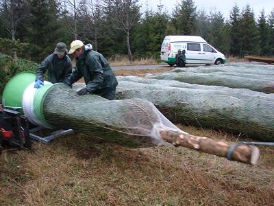 Les sapins de grande taille, jusqu'à 10 m, sont tous livrés emballés sous filet, pour protéger les branches pendant le transport