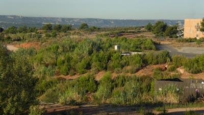 Pin d'Alep (Pinus halepensis) mycorhizés HAUTE PERFORMANCE®, 4 ans après plantation. Hauteur moyenne 250cm et plus. Lors de la plantation : les plants étaient âgés d'un an élevés en godet ROBIN ANTI CHIGNON®