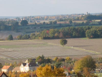 Plantation de M BRUNEAU réalisée sur film  plastique 80 microns protection des plants par une gaine maille mixte Hauteur 60 cm diamètre 20 cm.
