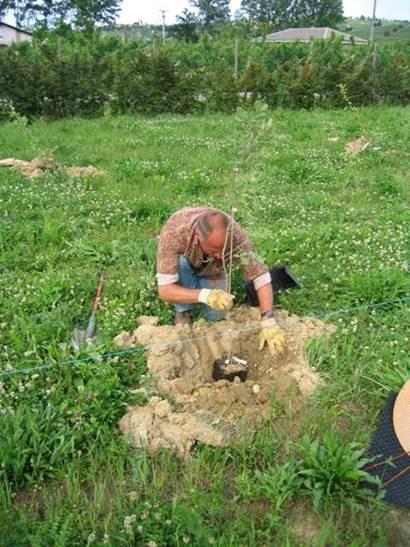 Pour les parcelles de petite surface  travail du sol en potet a lemplacement des arbres sur 1m2 et 30 cm de profondeur.