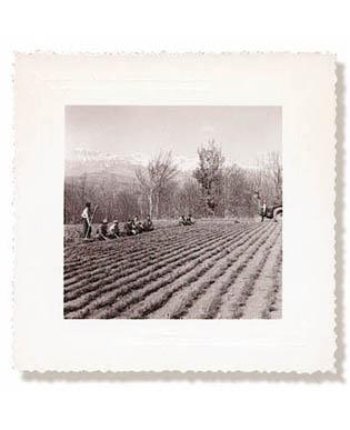 ROBIN-nurseries-1948.jpg