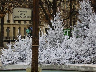 Rond point des Champs Elysées : Sapins de Noël floqués blancs produits et livrés par ROBIN Pépinières dans le cadre du marché de fourniture passé avec la ville de Paris.