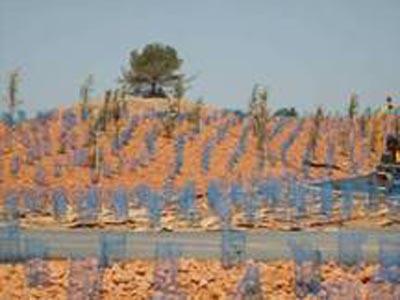 Vue du chantier 6 mois après plantation