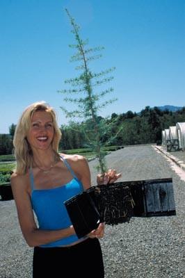 2000/2001 : Nouveaux modèles de godets ROBIN ANTI-CHIGNON®